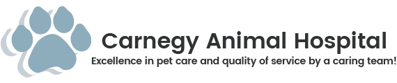 Carnegy Animal Hospital | Veterinarian in Halifax, Nova Scotia
