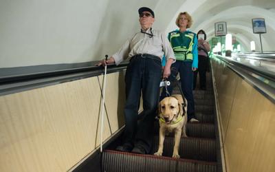 image for Assistance Dog Week